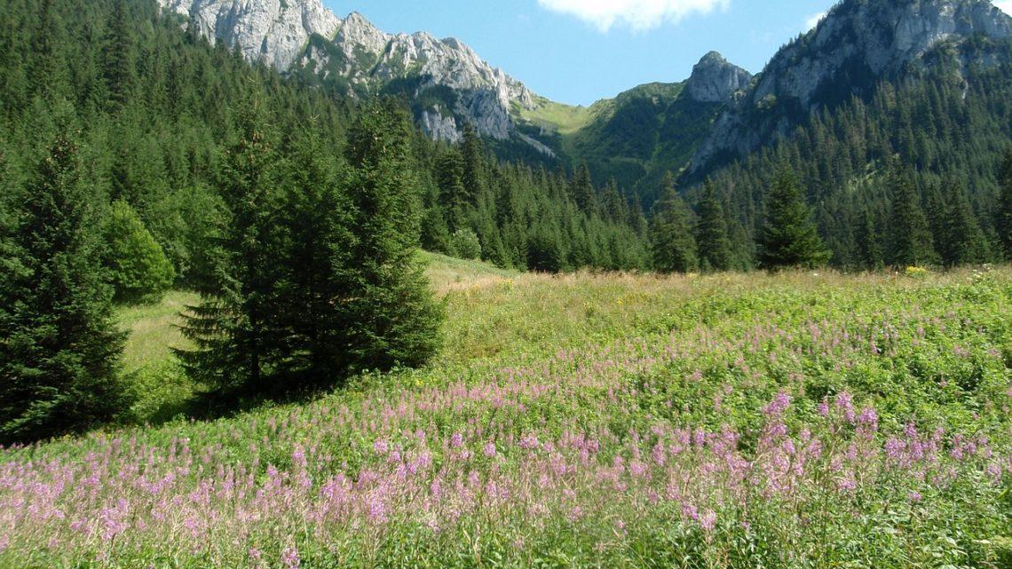 Wypoczynek w Zakopanem – gdzie się zatrzymać?